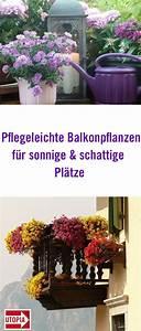 Sichtschutz Pflanzen Pflegeleicht : balkonpflanzen pflegeleichte sorten f r sonnige und ~ A.2002-acura-tl-radio.info Haus und Dekorationen