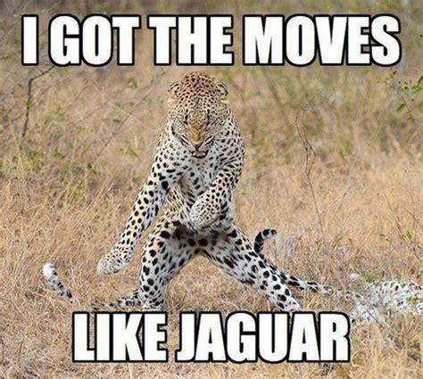 Funny Memes Animals - 30 funny animal captions part 10 30 pics amazing creatures