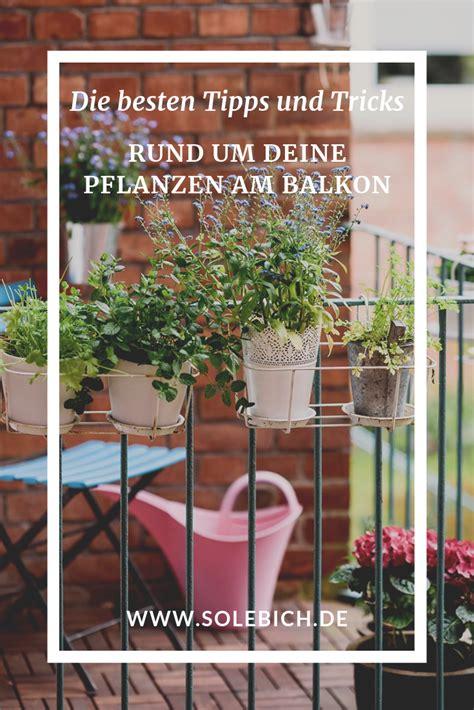 Die Besten Balkonpflanzen by Balkonpflanzen Die Besten Tipps Und Tricks Garten