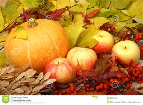 a pumpkin and apples royalty free stock photo image