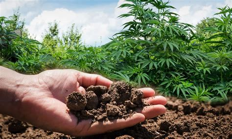 The Right Preparation For Your Outdoor Cannabis Garden