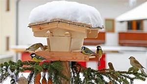 Futterglocke Selber Machen : vogelfutter selber machen mit kindern ohne kochen wohn design ~ Frokenaadalensverden.com Haus und Dekorationen