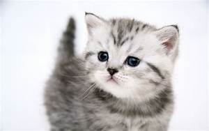 Cute Baby Cats - Cool Stories and Photos