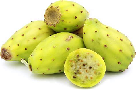 cactus fruit green cactus pears information recipes and facts