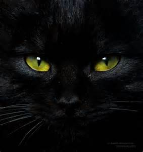 black cats with green green eyed black cat critters r emotion al