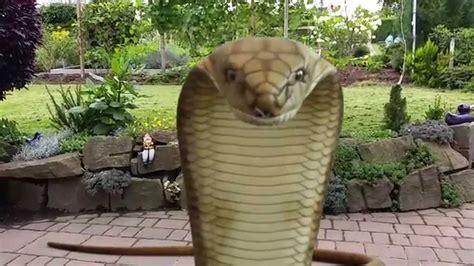 Der Garten Guru by Fx Guru Riesen Schlange Im Garten