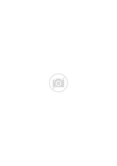 Fern Botanical Leaf Minimalist Navy Leaves Plant
