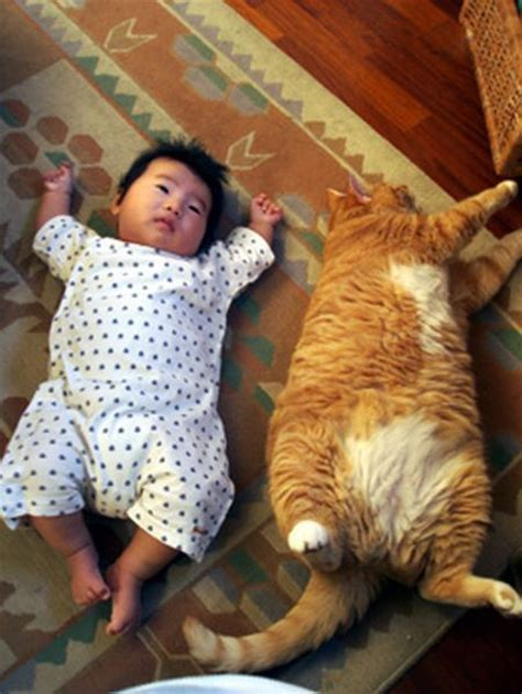cats and babies cats baby and cat