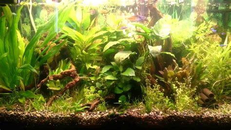mein 200 liter aquarium