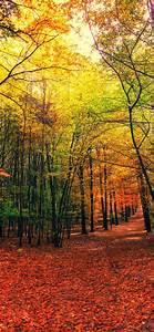 Forest, Wallpaper, 4k, Autumn, Sunny, Day, Foliage, Sunlight