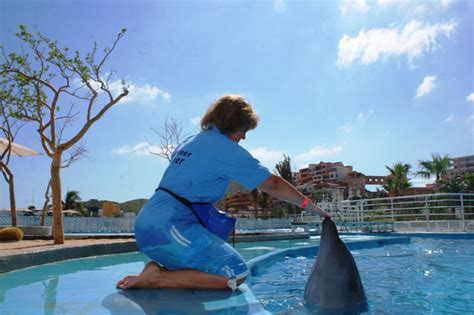 Dolphin Trainer For A Day In Cabo San Lucas