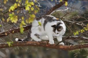 file cat in tree03 jpg wikimedia commons