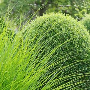 Traitement Mauvaise Herbe : entretien de jardins et terrasses l 39 adpj ~ Melissatoandfro.com Idées de Décoration
