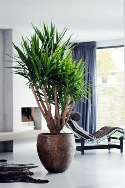 yucca palme  fantastische bilder zur inspiration