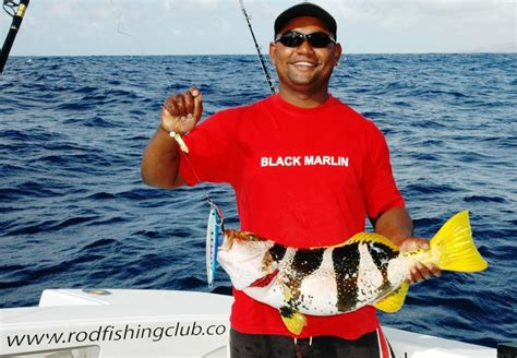 groupers grouper fishing rod club saddle feeding fish