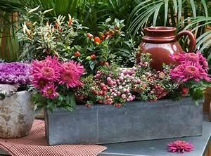 Fleur D Hiver Pour Jardinière : 3 jardini res d 39 automne fleuries ~ Dailycaller-alerts.com Idées de Décoration
