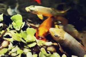 clarks pet emporium fish pond accessories