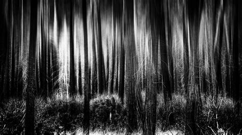 Black And White Backgrounds Black And White Forest Background For Desktop Wallpaper Wiki