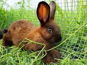 Wie Alt Werden Berner Sennenhunde : wie alt werden kaninchen lebenserwartung der langohren ~ Eleganceandgraceweddings.com Haus und Dekorationen