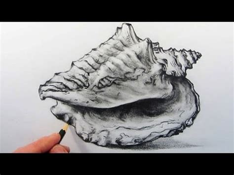 draw  shell pencil drawing youtube