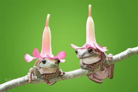 frog with hat frog dumpy dumpyfrog green wallpaper by
