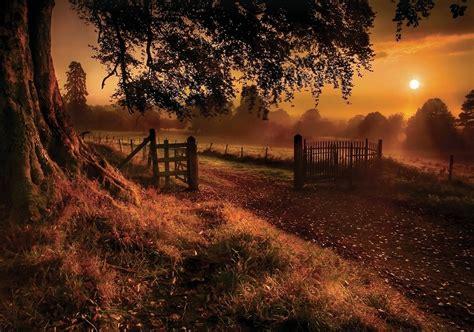 fall sunrise trees grass fence gates road sun rays