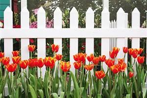 Tulpen Im Glas Ohne Erde : tulpen im garten so pflegen sie sie bestens ~ Frokenaadalensverden.com Haus und Dekorationen