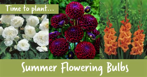 it s time to plant summer flowering bulbs wilkolife