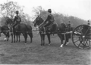 Ww1 Gun Teams Horse Harness
