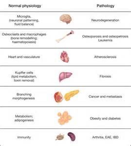 Examples Homeostasis Disease