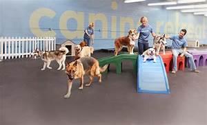 Dog daycare canine retreat dog daycare boarding for Dog home boarding near me