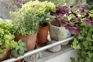 Welche Pflanzen Für Balkon : h bsche balkonpflanzen f r die kalte jahreszeit ~ Michelbontemps.com Haus und Dekorationen