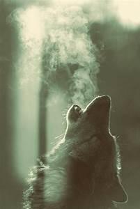 nieves lobo | Tumblr