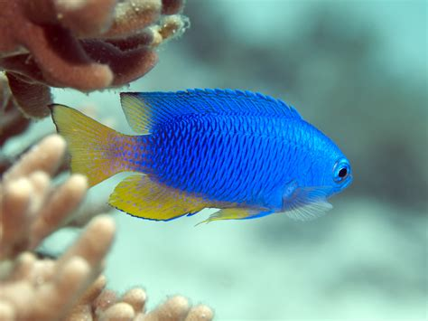 A Beginner's Guide To Tropical Fish Identification • Scuba