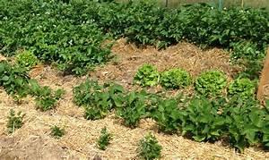 Le paillage naturel au jardin comment faire nos conseils for Maison humide que faire 11 le paillage naturel au jardin comment faire nos conseils