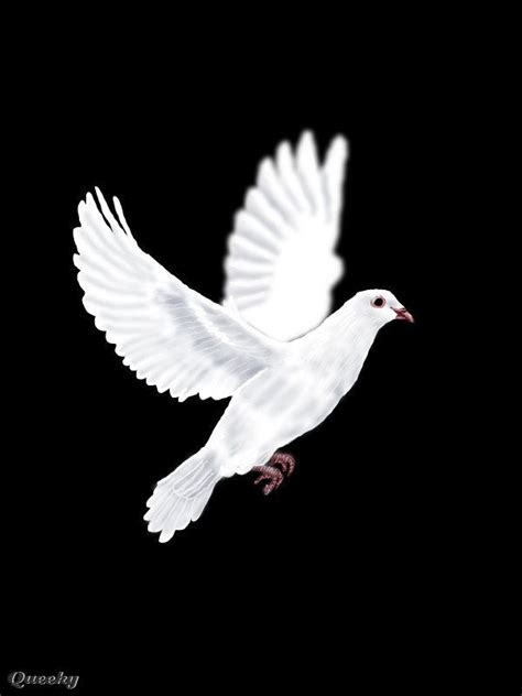 animated doves flying animated dove butterflys doves