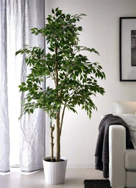 health benefits   faux plants  home  real