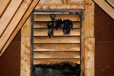 attic pest removal    pests    attic