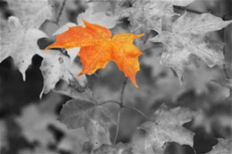 create black  white photographs  color