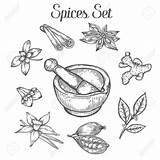 Spices Drawing Getdrawings Sketch Hand sketch template
