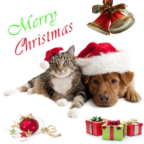 merry christmas pics aruba animal shelter