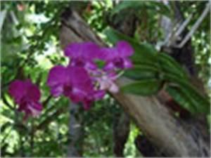 Ranken Blumen Garten : orchideen blumen garten orchidee gedichte fotos pflanzentipps pflanzenpflege pflanzen ~ Whattoseeinmadrid.com Haus und Dekorationen