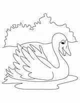 Swan Coloring Colouring Lake Printable Animals Getdrawings Getcolorings sketch template