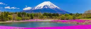 flowers for mt fuji area yamanashi japan national tourism