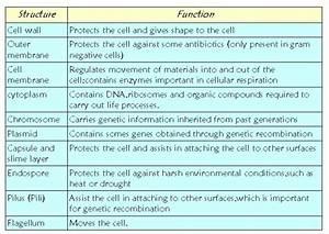 Unit  Viruses  Bacteria And Human Health