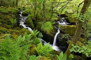 0037 Dartmoor, Devon Caine-Douglas DESIGN & PRINT