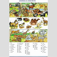 Animals Vocabulary, Exercises And Games  My English Blog