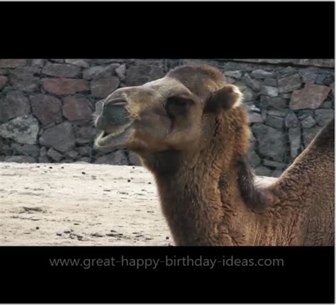 happy birthday camel card  specials ecards greeting
