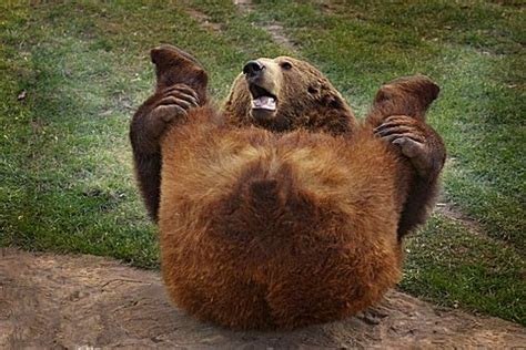 Brown Bear On Hind Legs