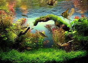Plantes à Suspendre : les plantes de l 39 aquarium mur v g tal et aquariums ~ Premium-room.com Idées de Décoration